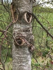 Tree Sprites